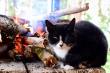 Moncho's cat warming up right next to the fire.